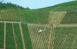 Ein Hubschrauber der die Weinreben besprüht