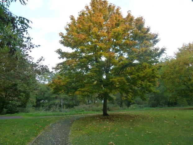 Ein gelber Baum im park