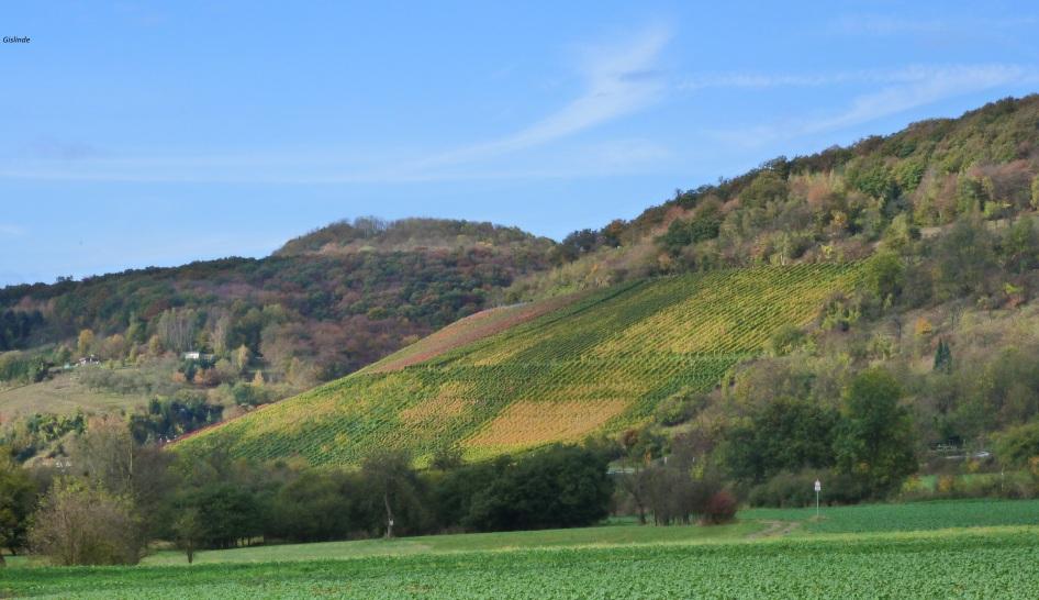 Weinberg bei Bad-Botendorf