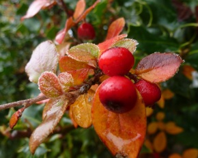 Wie schön kann der Herbst auch sein.