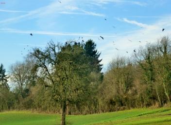Ein Baum voller Krähen und alle fliegen davon.