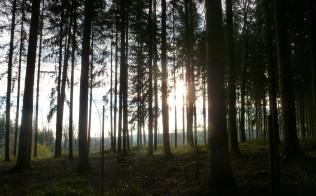 Nur die Sonne schaut durch den Wald.