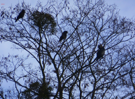 Ein Baum voller Komorane