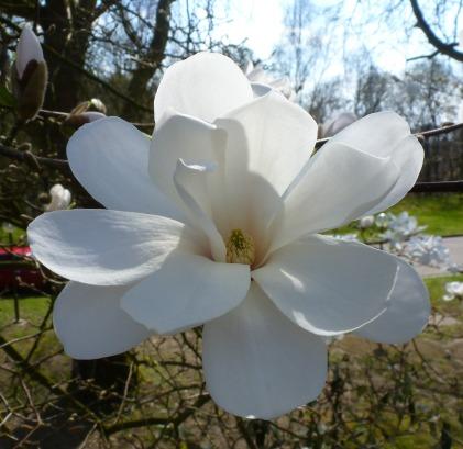 Blüte am Baum.