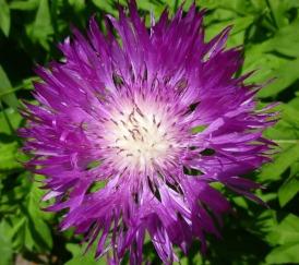 Eine schöne Lila Farbe..