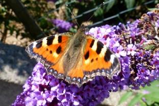 Ein wunderschöner Schmetterling.