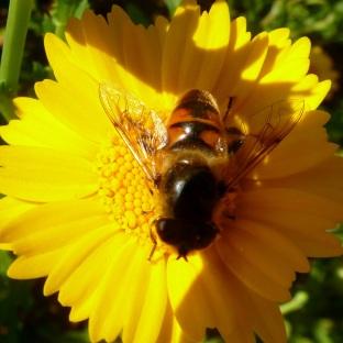 Eine kleine Biene