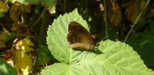 Ein Schmetterling was nicht seinen Namen.