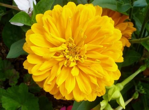 Bin gelb wie die Sonne.