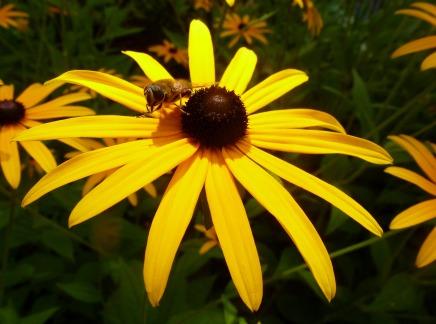 Blume mit Biene