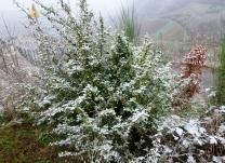 Schnee Schnee..