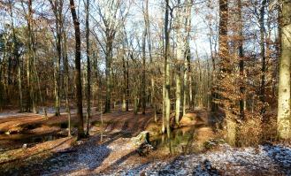 Still ruht der Wald