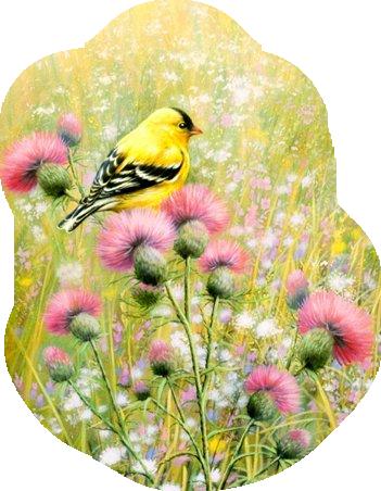 animaatjes-vogels-421230
