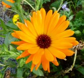Noch eine schöne Blume
