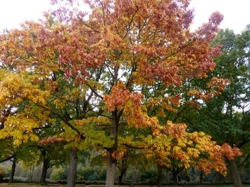 So schön kann der Herbst sein.