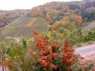 So schön kann es im Herbst an der Ahr sein