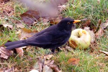Der Apfel ist Lecker.