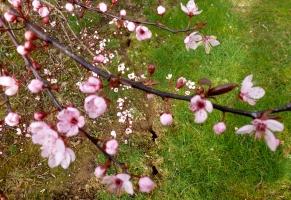 Die ersten schönen Blüten...