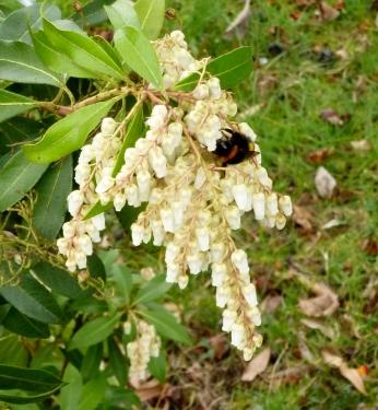 Blume mit Hummel..