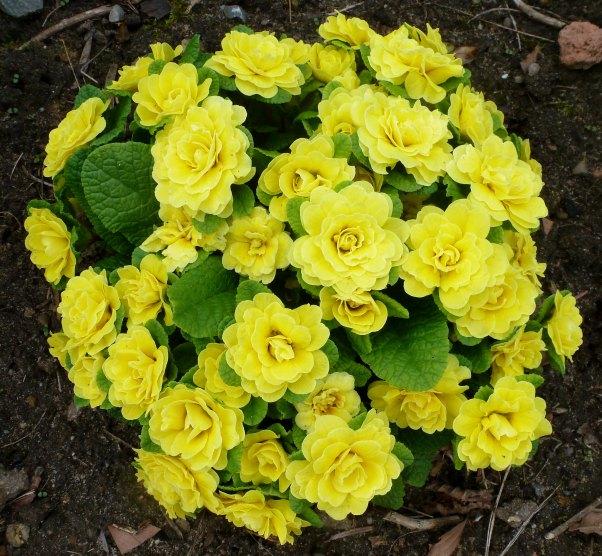 Wunderschönes Gelb..