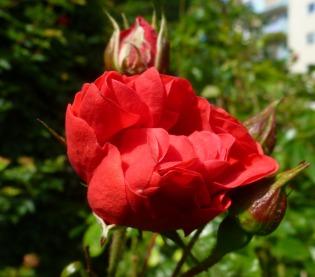 Ein schönes rot..