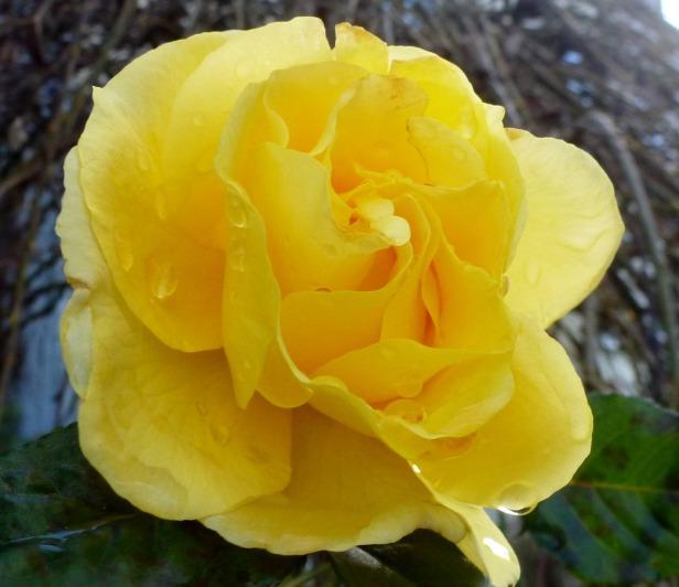 So ein schönes gelb.