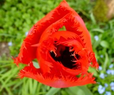 Wunderschön Rot
