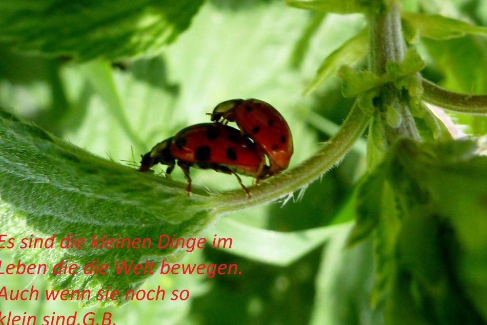 Kleines rotes Käferleim jetzt bist du nicht mehr allein.Marienkäfer er bringt Glück,darum schau vorwärts nicht zurück...G.B.