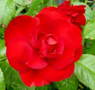 Ein schönes Rot