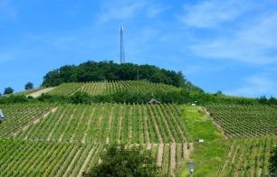 Blick auf die Weinberge...
