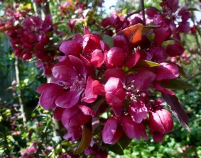 So schöne Blüten